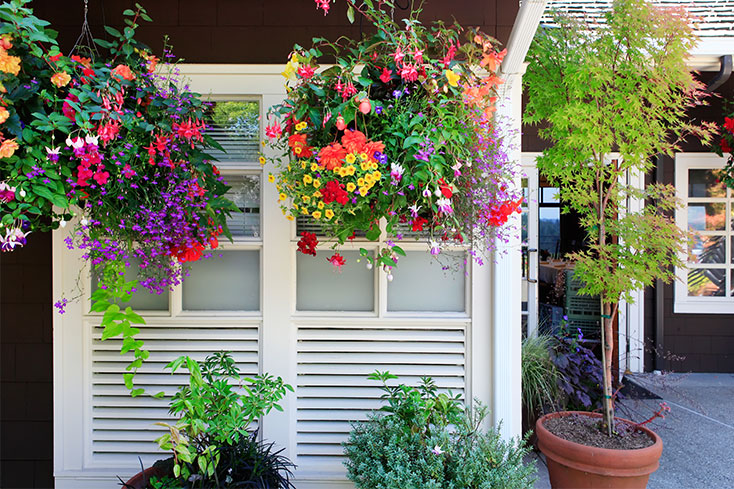 flowers in hanging baskets